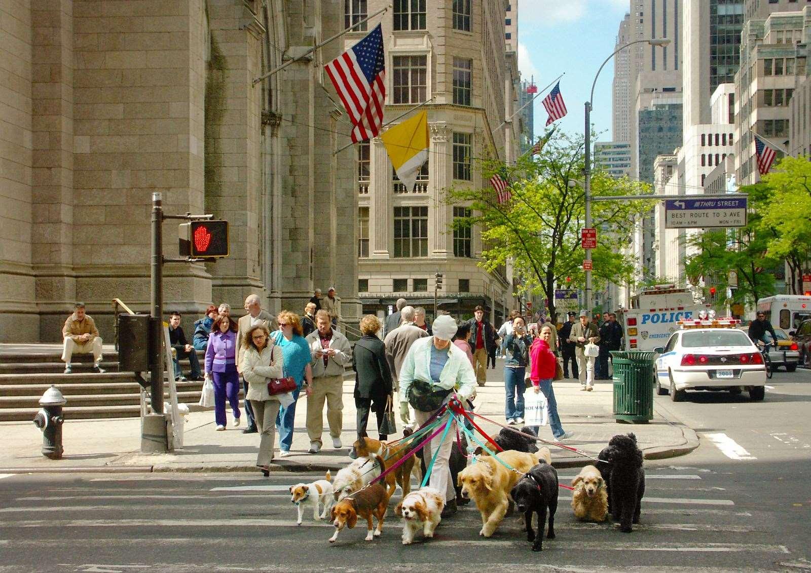 New York Walkies- Jenny Seculer
