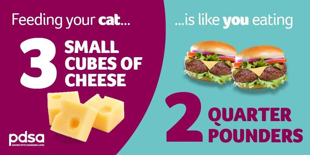 The PDSA has launched a campaign to remind owners about how best to feed their pets
